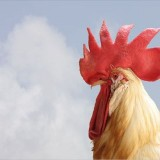 【営業譲渡★居抜き】鶏の継承者求ム!at 尼崎のエエ場所
