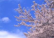 """3月は""""弥生"""" 春、待ちに待った春"""